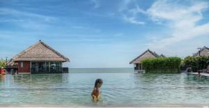 avani-sepang-gold-coast-pool