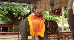 istana_gajah_Ayutthaya_03