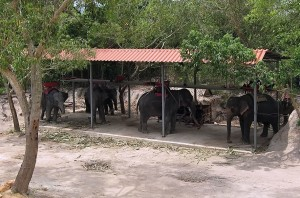 blog-hatyai-elephant-trekking-01