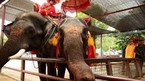 istana_gajah_Ayutthaya_02